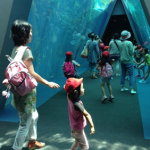 Walking through a big underwater tunnel, surrounded by fantastic sights