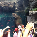 Kids amazed at how big the sea lion is