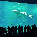 Whale shark at the Okinawa Churaumi Aquarium